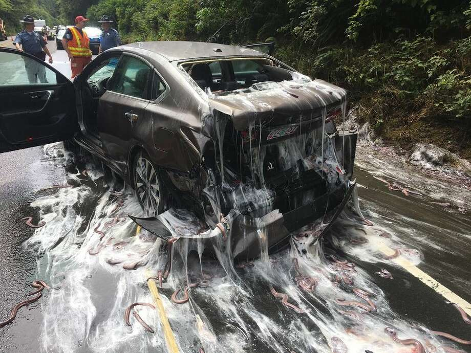 Oregon State Police released these photos showing the aftermath of an accident involving a truck carrying eels on Hwy. 101. Photo: Oregon State Police