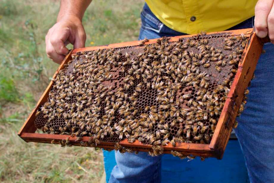 Rick Fink keeps several of his numerous bee hives on his ranch property. Photo: By Alexis Will, San Antonio Express-News