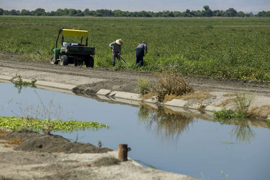 Workers at a private farm next to the main water delivery canal that the San Luis National Wildlife Refuge uses on Friday, July 14, 2017, in Los Banos, Calif. Photo: Santiago Mejia, The Chronicle