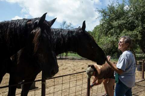 Hearing on fate of seized horses delayed - Beaumont Enterprise