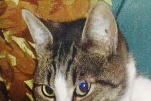 Thumper was one of up to 16 San Jose cats slain by Robert Farmer, 26.