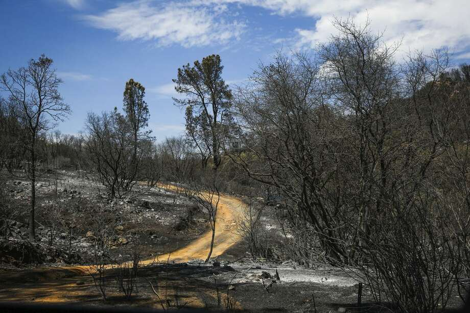 Charred trees are all that is left in the forested foothills after the Wall Fire destroyed more than a dozen homes.  Photo: Gabrielle Lurie / Photos By Gabrielle Lurie / The Chronicle / ONLINE_YES