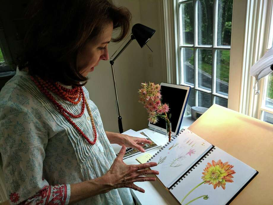 Jeanne Reiner stands over her drawing desk at her Greenwich studio. For her botanical art drawings she must dissect flowers piece by piece to accurately depict them. Photo: Jennifer Turiano / Hearst Media CT