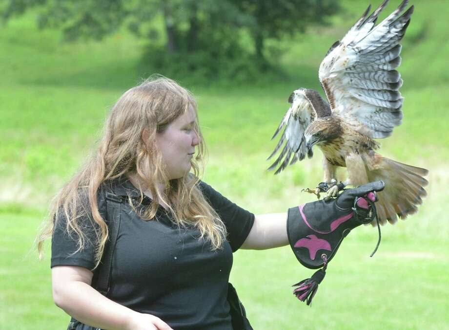 Weston's Christine Peyreigne has her three year old Red tailed Hawk Theron ready to to fly during a program about the sport and science of Falconry at Lachat Town Farm on Sunday July 16, 2017 in Weston Conn. Peyreigne is the state's youngest and only female General Class Falconer and uses her birds of prey, including Milo, a Harris Hawk for hunting Photo: Alex Von Kleydorff / Hearst Connecticut Media / Norwalk Hour
