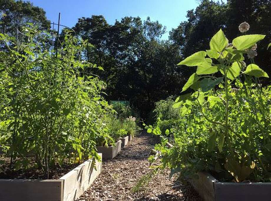 """Photo submitted to the Greenwich Historical Society 2017 """"This Place Matters!"""" contest: In a quiet forest clearing is Greenwich Community Gardens' Bible Street location. A place to make friends and grow your summer vegetables and flowers. Photo: Regan Avery / Contributed"""
