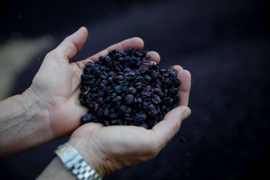 Grape remains that are used for compost in Napa. Photo: Sarah Rice, Special To The Chronicle