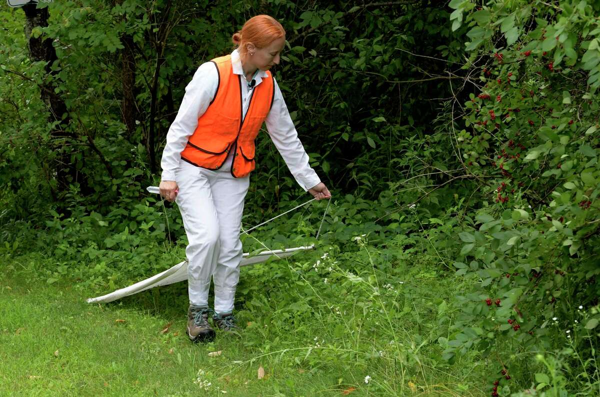 Melissa A. Prusinski, research scientist and laboratory supervisor drags for ticks for sampling at Veteran's Memorial Park after a second confirmed case of potentially deadly powassan virus has been diagnosed in the area Tuesday July 18, 2017 in Ballston Lake, N.Y. (Skip Dickstein/Times Union)