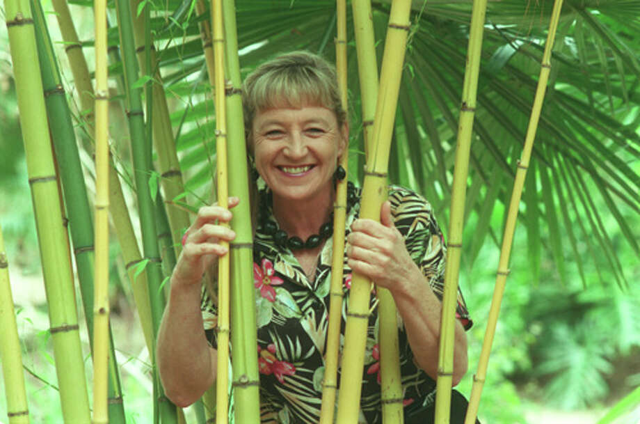 Mercer Arboretum and Botanic Gardens new director Linda Gay looks thru Golden Bamboo one of the many plants grown at the north Houston area arboretum. 02/02/2001 (E. Joe Deering/Chronicle). HOUCHRON CAPTION  (02/09/2001): Linda Gay, the newly appointed director of Mercer Arboretum & Botanic Gardens, is known to have a thing for plants. In fact the garden is in her office.  HOUCHRON CAPTION  (02/10/2001): Mercer Arboretum & Botanic Gardens director Linda Gay peeks through bamboo. Photo: E. Joseph Deering, Staff / Houston Chronicle