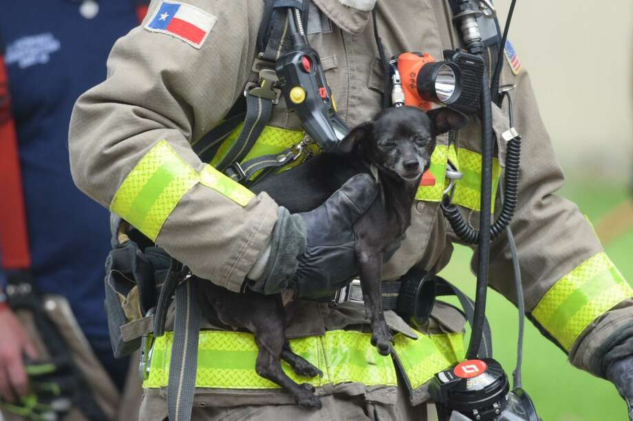 Firefighters on last June saved a woman's dog from a fire at a Southeast Side home. The American Red Cross is looking for 500 volunteers to install 1,000 smoke alarms Oct. 14 in houses that don't have them. Photo: Caleb Downs /Caleb Downs / San Antonio Express-News