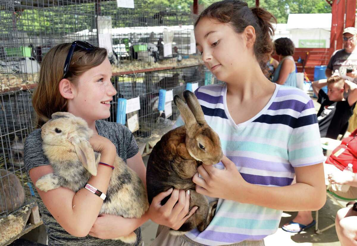 Show rabbit competitors Reilly McCormick, 11, left, of Schuylerville with her Holland Lop Ozzie and Isabella Fantauzzi, 15, of Burnt Hills with her Mini-Rex Hickory at the Saratoga County Fair Tuesday July 18, 2017 in Ballston Spa, NY. (John Carl D'Annibale / Times Union)