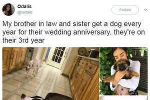 """My brother in law and sister get a dog every year for their wedding anniversary, they're on their 3rd year""  Odalis said on Twitter ."