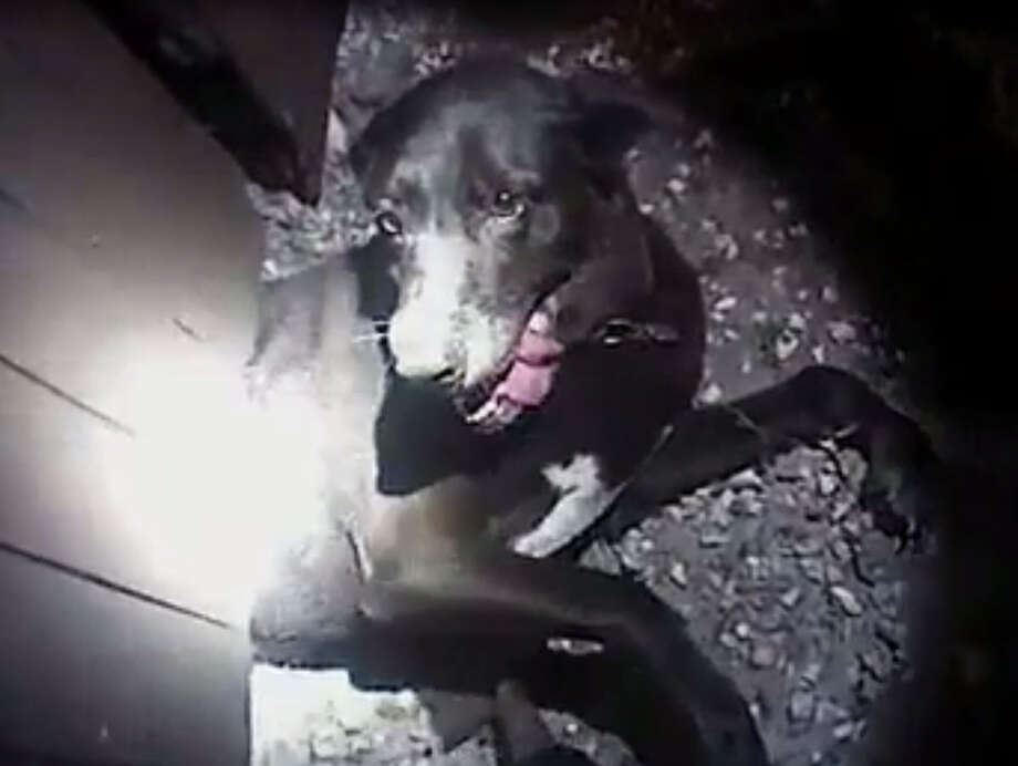 Body cam shows officers rescuing this dog trapped under afence.>>Here is a list of the top male, female names for Houston dogs...