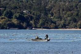 Employees work near oyster beds at the Tomales Bay Oyster Company in Marshall, Calif. on Friday, Oct. 2, 2015. The popular spot on the eastern shore of Tomales Bay is being to forced to close down its picnic areas by Marin County citing a concern for parking and traffic issues along Highway 1.