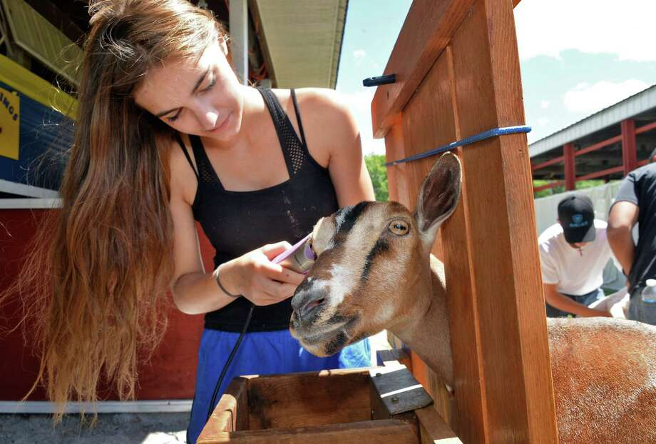 Natasha Vincek, 17, grooms her miniature dairy goat Appoline during opening day at the Saratoga County Fair Tuesday July 19, 2016 in Ballston Spa, NY.  (John Carl D'Annibale / Times Union) Photo: John Carl D'Annibale / 20037362A
