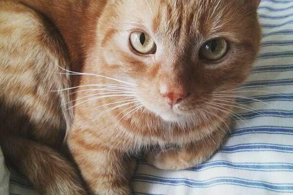 Django, Alaina Borst's cat.