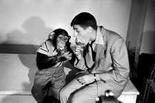 American comedian and actor Jerry Lewis eats an ice cream cone with his chimpanzee co-star during a break in filming 'My Friend Irma Goes West,' in 1950.