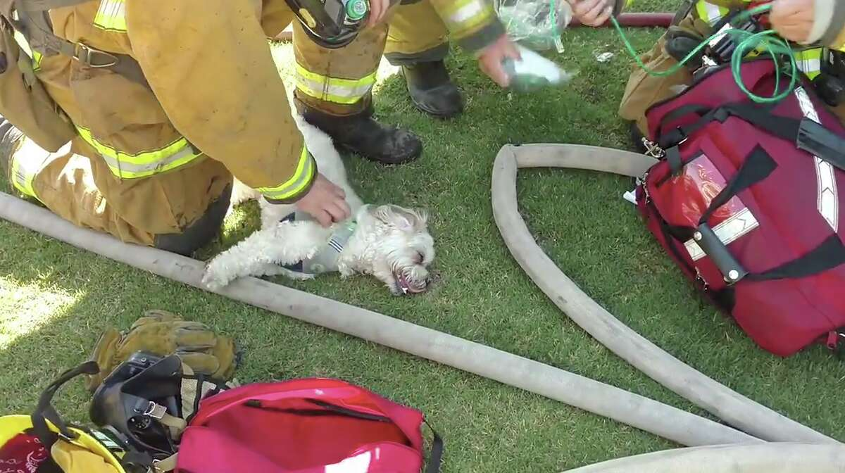 Firefighters attempt to resuscitate a dog pulled from a Bakersfield house fire on Wednesday, July 19, 2017.