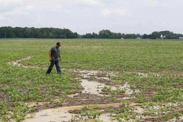 In this Wednesday, July 12, 2017 photo, Doug Phenicie, who farms about 1,800 acres in northern Ohio, walks across a flooded soybean field in New Washington, Ohio. The company that developed the Dakota Access oil pipeline is entangled in another fight, this time in Ohio where work on its multi-state natural gas pipeline has wrecked wetlands, flooded farm fields and flattened a 170-year-old farmhouse. (AP Photo/Tony Dejak)