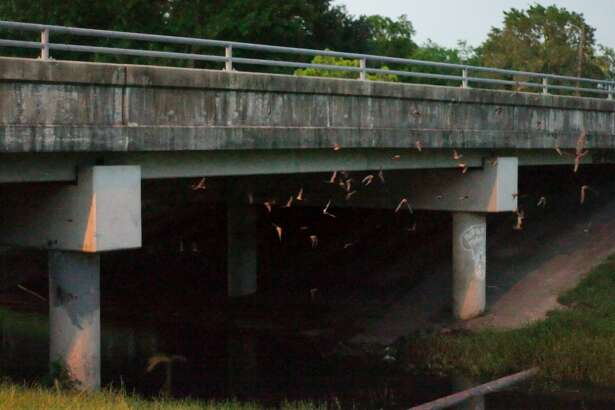 Thousands of Mexican Freetail bats emerge for their nightly feeding in Pearland Wednesday, July 20.  SLIDESHOW: Keep clicking to see 15 things you may not know about bats.