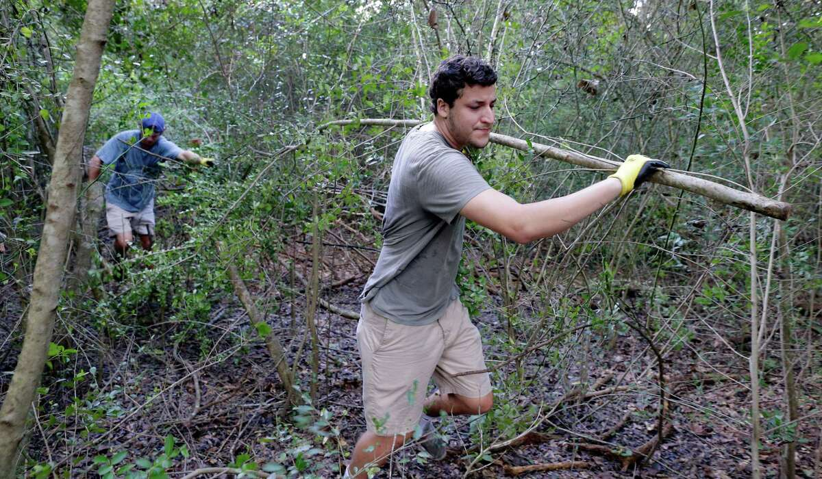 Barrettt Schulze navigates the heavy woods and Victor Gonzales hauls tree-length wild yaupon in New Caney.