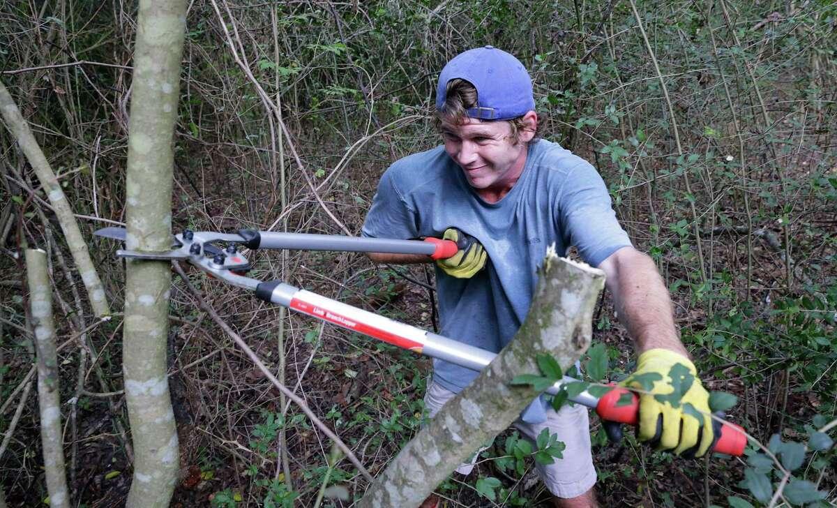 Barrettt Schulze lops a branch of wild yaupon.