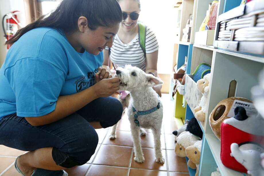 """Alexis Quiroga, owner of PAWsitively Sweet Bakery, gives Samantha Hinojosa's dog """"Luna"""" a treat. Quiroga's bakery is in E-Co Lofts, the first significant development to be built near the AT&T Center since the arena opened in 2002. Photo: Edward A. Ornelas /San Antonio Express-News / © 2017 San Antonio Express-News"""
