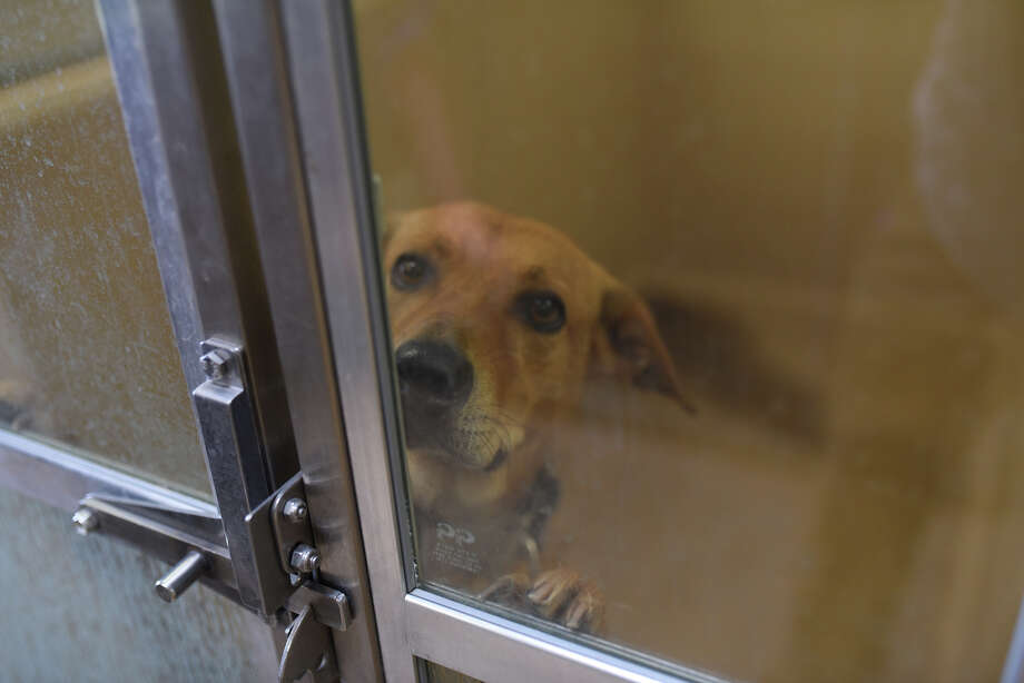 """The Midland City Council will consider today an agreement for """"professional architectural and engineering services"""" for the construction of a new animal shelter and demolition of the existing animal shelter.  Photo: James Durbin"""