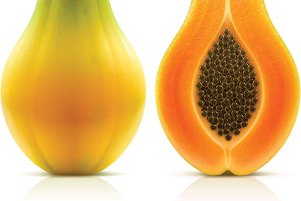 Maradol papayas are a large, oval fruit that weighs 3 or more pounds, with green skins that turn yellow when the fruit is ripe. The flesh inside the fruit is salmon-colored. Photo: CDC