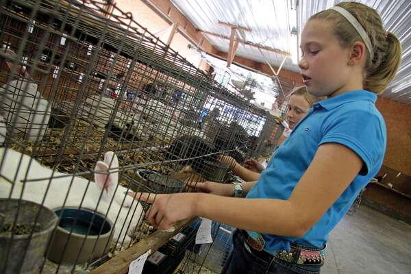 Livestock competitions, like the rabbit judging pictured here, remain central to the Madison County Fair, which begins Tuesday in Highland.