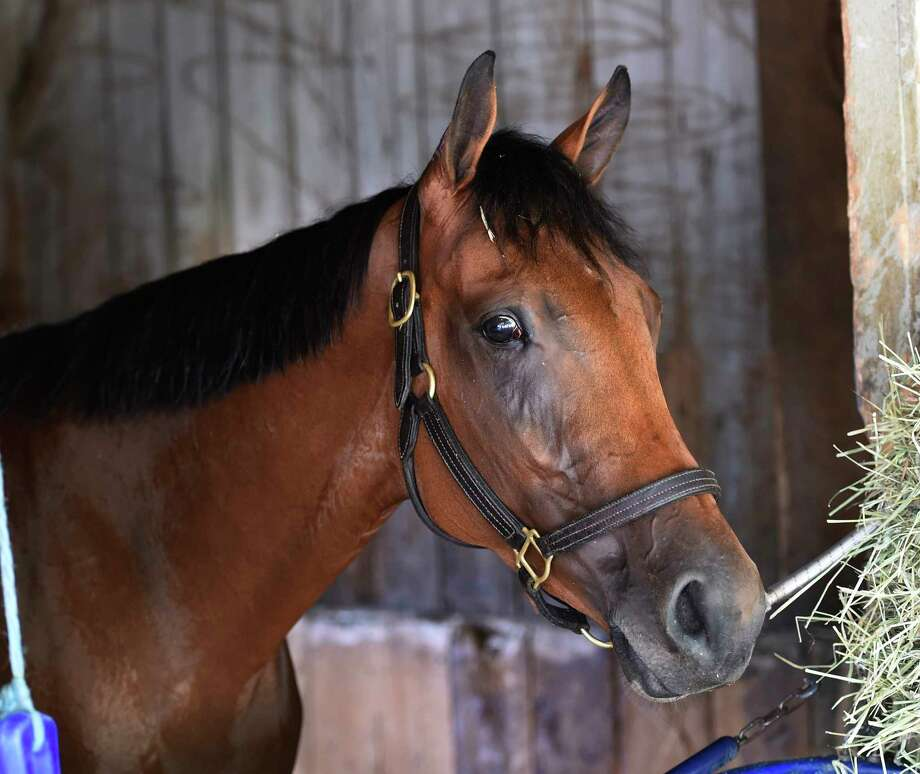 Lady Eli, back in training after a considerable time off for injury breezed this morning at the Oklahoma Training Center near the Saratoga Race Course Aug. 7, 2016 in Saratoga Springs, N.Y. (Skip Dickstein/Times Union) Photo: SKIP DICKSTEIN