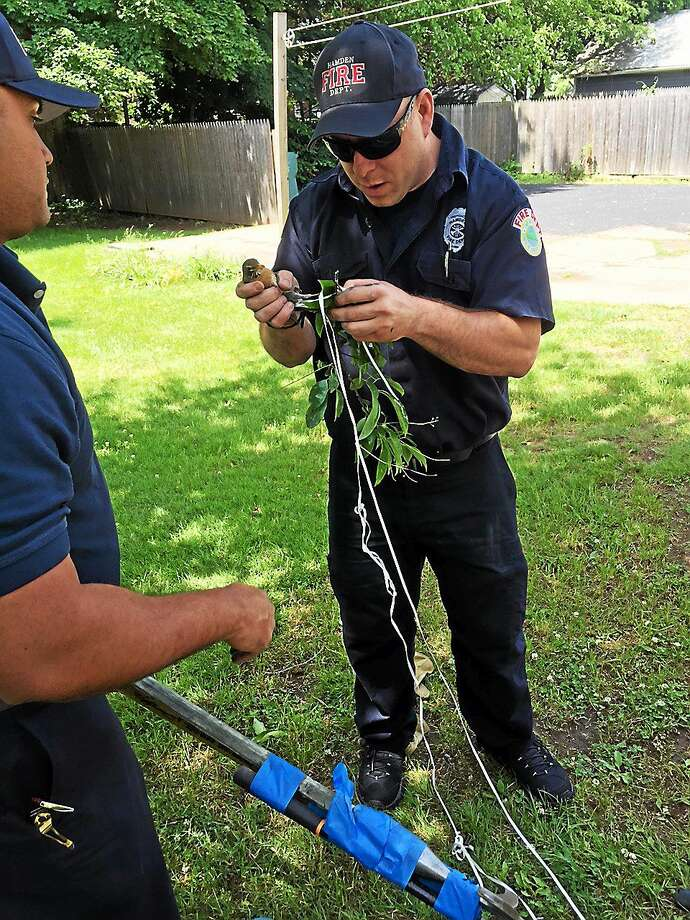 (Photo courtesy of Hamden Fire Department) Hamden firefighters Fernando Feliz, left, and Mike Mordecai rescue a robin entangled in a balloon string, hanging upside down in the upper branches of a tree on Gorham Avenue Wednesday morning. Photo: Journal Register Co.