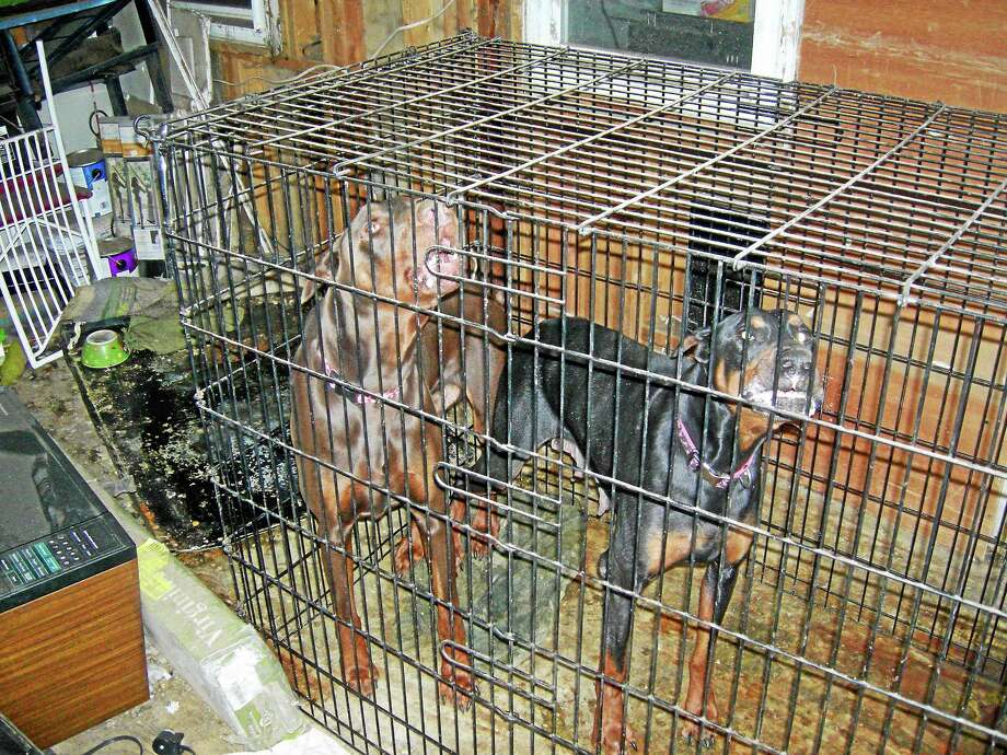 Two dogs in a pen inside a Clinton home. Photo: Clinton Police Photo
