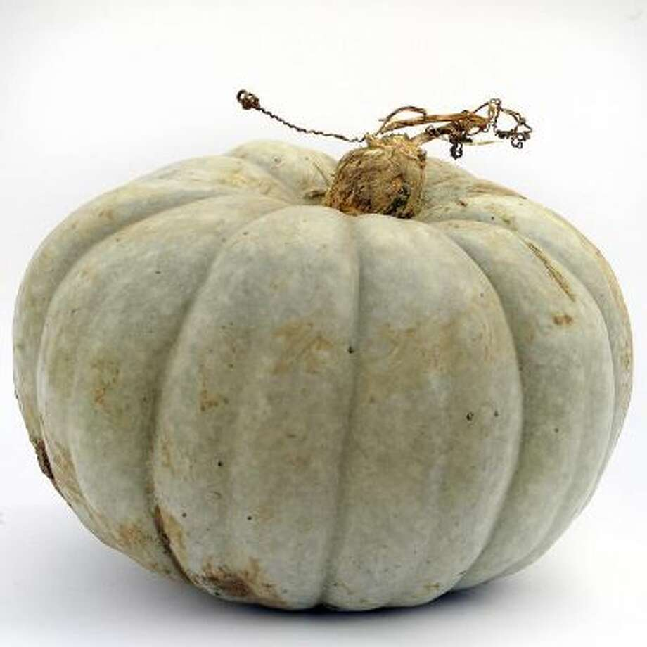 Jarrahdale squash. Photo: DP / Copyright - 2013 The Denver Post, MediaNews Group.