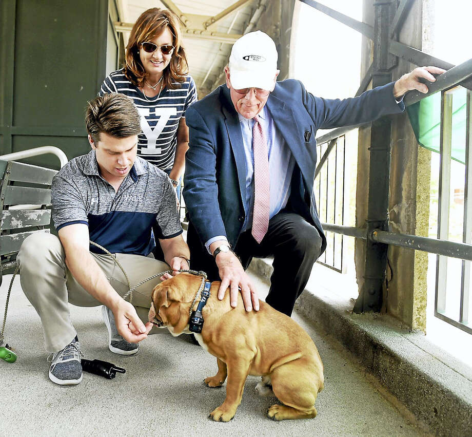 (Peter Hvizdak - New Haven Register)Kevin Discepolo, Assistant Athletic Director of Facilities, Operations, & Events, left,  the present caretaker of the Yale University mascot Walter, an English Bulldog, Suzy Politz of Austin, Texas, mother of Yale baseball pitcher Scott Politz,  center, and Chris Getman of Hamden, 75, Yale Class of 1964, the former keeper of the Yale Bulldog Mascot Handsome Dan since 1983, right, Yale Field in New Haven during the Ivy League Baseball Championship Tuesday, May 16, 2017. Photo: ©2017 Peter Hvizdak / ?2017 Peter Hvizdak