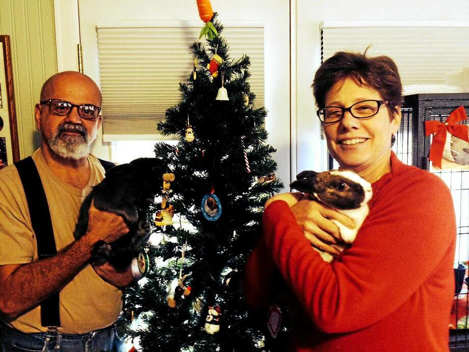 Al and Debbie Morgia with two of their bunnies. (Pam McLoughlin - New Haven Register) Photo: Journal Register Co.
