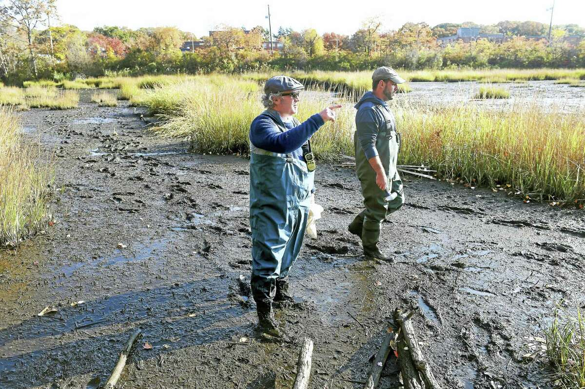 (Arnold Gold-New Haven Register) Southern Connecticut State University Associate Professor Scott Graves (left) and grad student Scott Thibault place markers in a marsh off of the Cove River in West Haven to study any change in the elevation of the marsh on 11/5/2016.