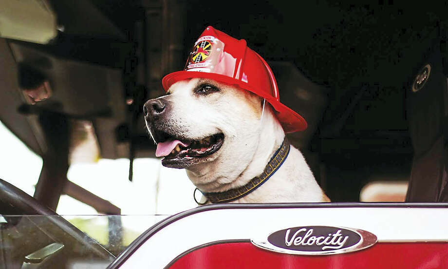 photo/Samantha Barracca   Dog named Christopher Charles Rutherford III poses in a fire truck. Photo: Digital First Media