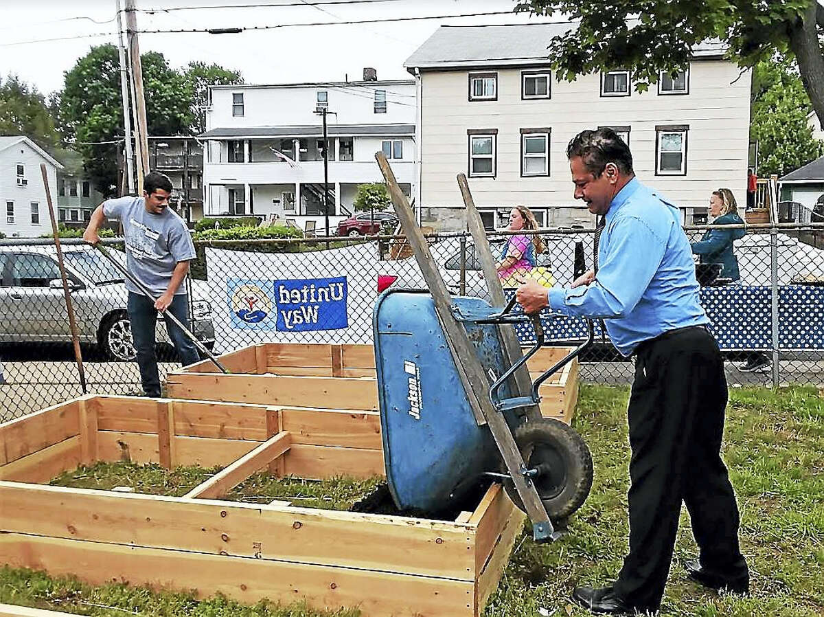 Contributed photo — Greg Martin Ansonia Mayor David Cassetti pitches into fill one of the planting containers at the community garden at Gatison Park.