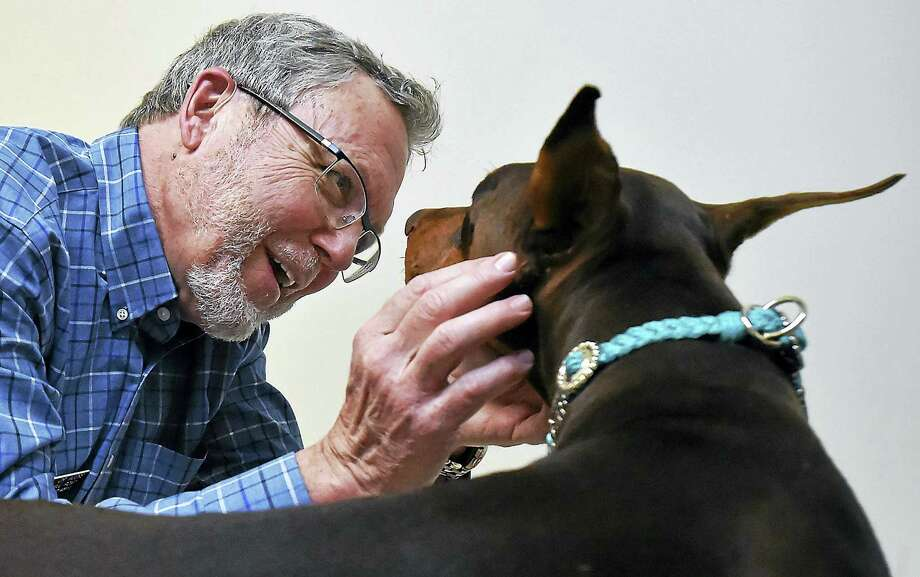 Dr. Kenton Moore, a veterinarian who specializes in pet acupuncture at Mill Pond Veterinary Hospital, 229 E.Main St. in Branford, inserts needles in the spine and legs of Legacee. Photo: Catherine Avalone — New Haven Register   / Catherine Avalone/New Haven Register