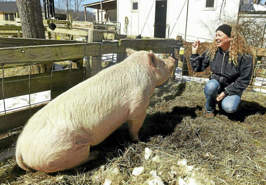 Children's book author Kathleen Schurman with her pet pig Buttercup at her Bethany farm last week.  Schurman has written a new farm adventure mystery book starring her late pet pig Ozzie. Photo: Peter Hvizdak - New Haven Register   / ©2017 Peter Hvizdak