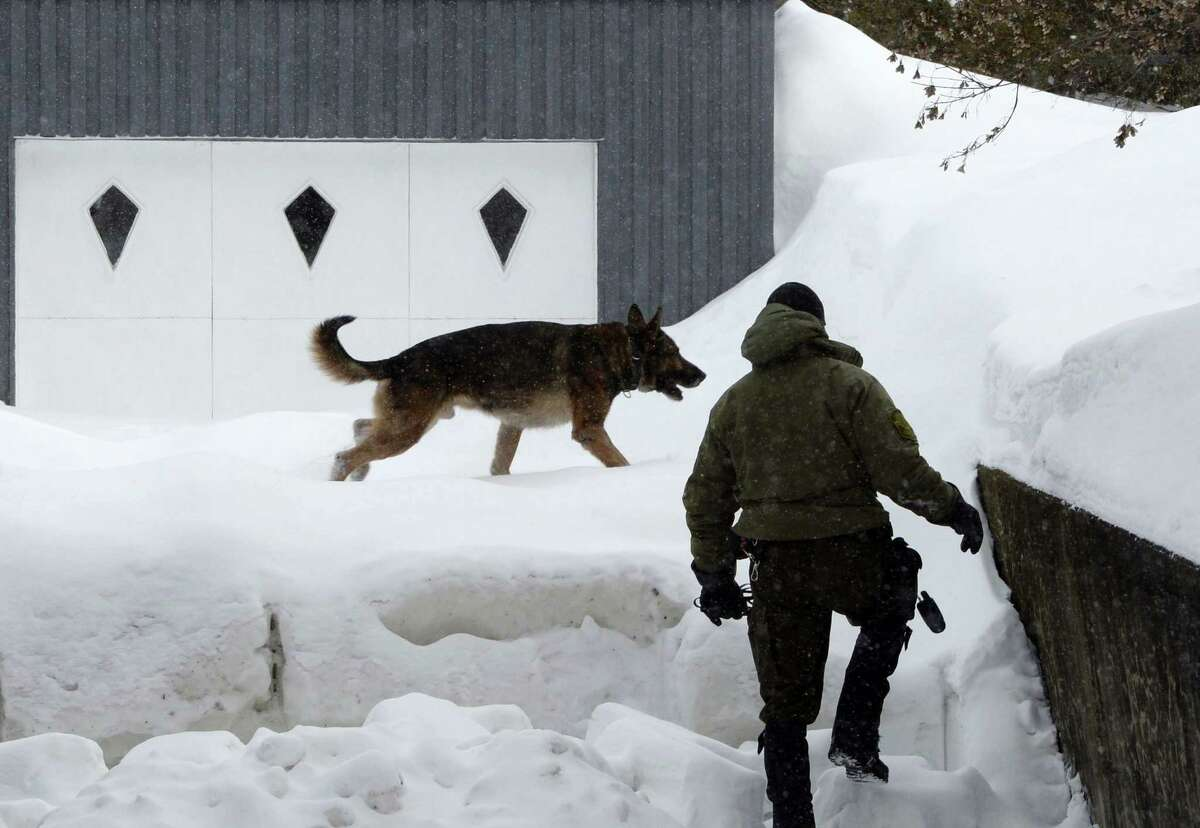 A police officer and police dog look for evidence near a home in the area of a Quebec City mosque on Monday. A shooting at a Quebec City mosque Sunday night left multiple dead and injured. One suspect was arrested at the scene and another nearby.