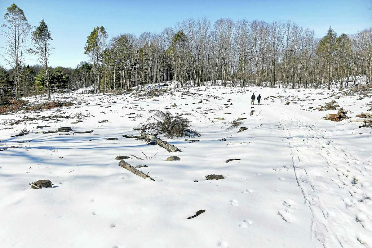 (Arnold Gold-New Haven Register) An area of the Maltby Lake Recreation Area where trees were cleared because of an invasive beetle in West Haven photographed on 3/20/2017.