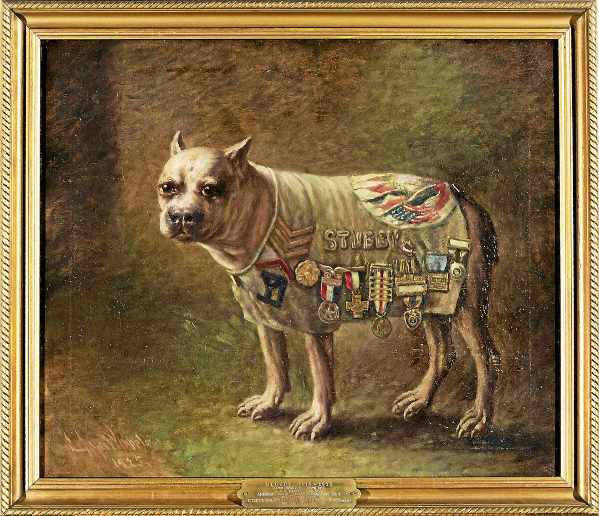 Charles Ayer Whipple's portrait of New Haven's Stubby, the most decorated animal of World War I.