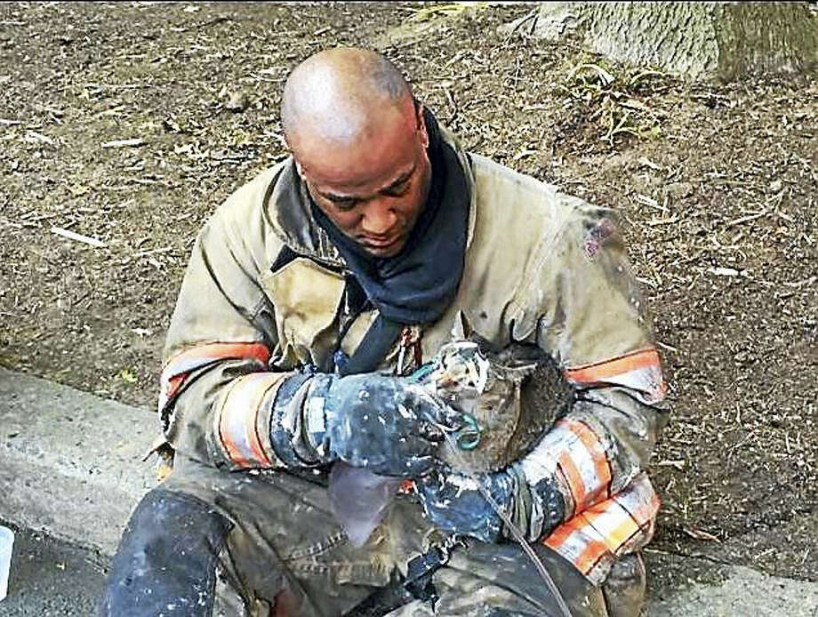 Firefighters rescued two cats from an apartment blaze in Takoma Park, Md. Photo: Courtesy Of Montgomery County Fire Department    / The Washington Post
