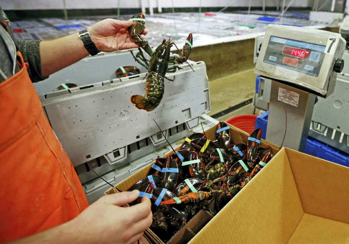 In this Dec. 10, 2015 photo, live lobsters are packed and weighed for overseas shipment at the Maine Lobster Outlet in York, Maine. The expanding market for lobsters in China is continuing to grow, with the country setting a new record for the value of its imports of the crustaceans from the United States.
