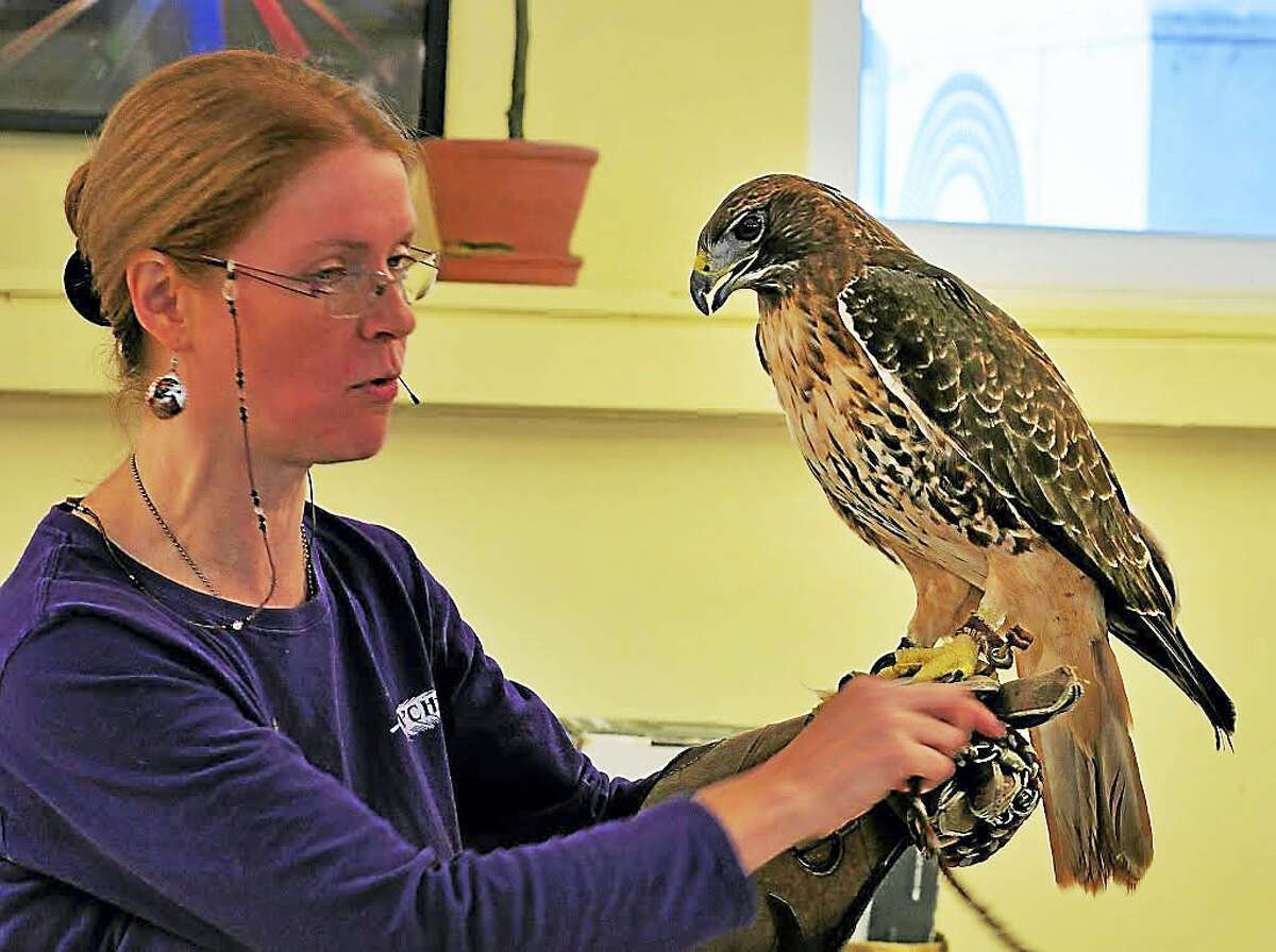 Christine Cummings-Secki with a red tail hawk