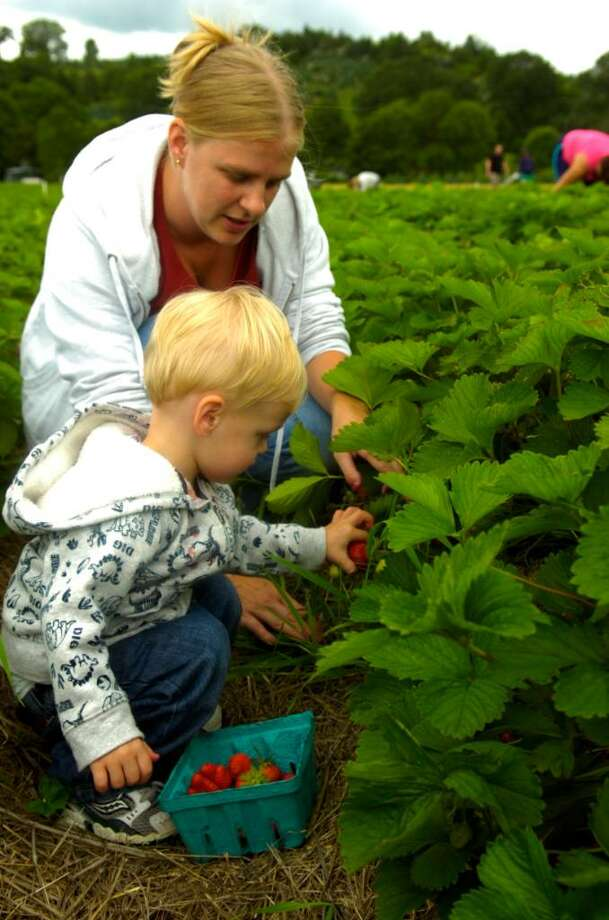 Seymour residents Trey Burgess, 2, and his mother, Michelle, pick strawberries at Jones Family Farms in Shelton on Friday, June 11, 2010. Photo: Lindsay Niegelberg / Connecticut Post