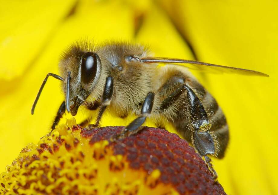 Attracting bees and butterflies to a garden is a noble pursuit, given that we all depend on these species and others to pollinate the plants that provide us with so much of our food, shelter and other necessities of life. Photo: EarthTalk  / iStockphoto
