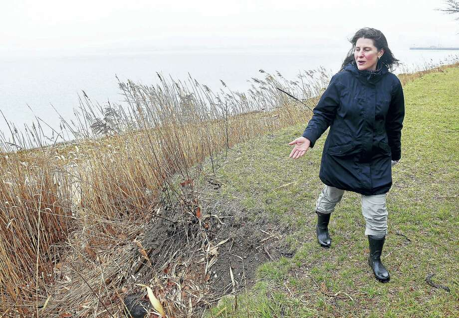 Elsa Loehmann, associate director of river restoration for Save the Sound, talks about a conceptual plan to create a living shoreline at East Shore Park in New Haven. Photo: Arnold Gold — New Haven Register