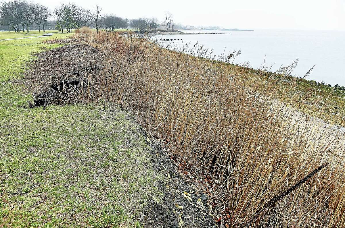 The eroding shoreline at East Shore Park in New Haven.
